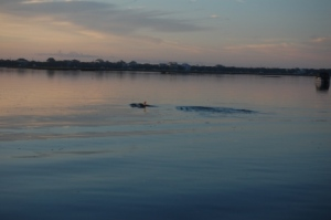 Morning dolphins!